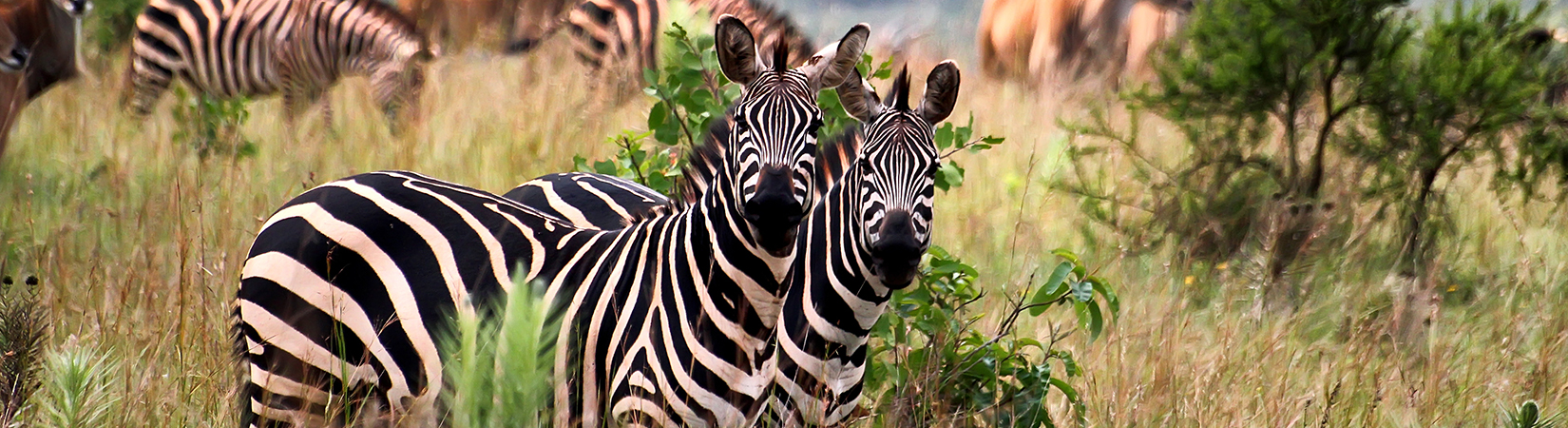 Incredible Rwanda a view of Akagera national park Rwanda