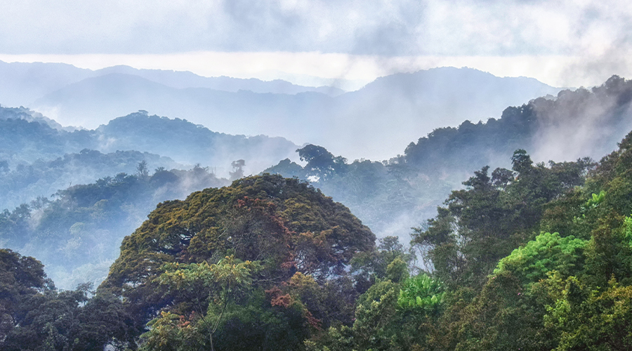 A view of Nyungwe forest - Rwandan national park