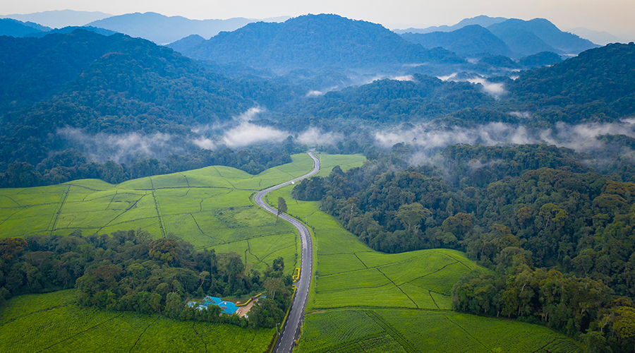 A view of Nyungwe national park from above in incredible Rwanda